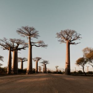 baobab-oil